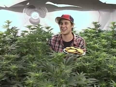 Bob le Chef - beurre de cannabis (2008) - YouTube