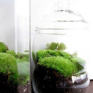 54 best images about growing moss indoors and out on pinterest. Black Bedroom Furniture Sets. Home Design Ideas