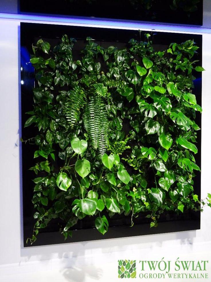 Połączenie roślin z nowoczesnym designem. #verticalgarden #zielonesciane #design