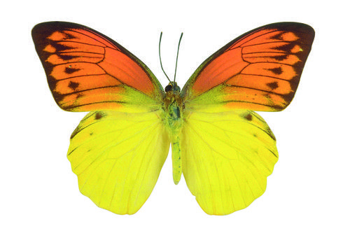 butterfly on yellow color - photo #47