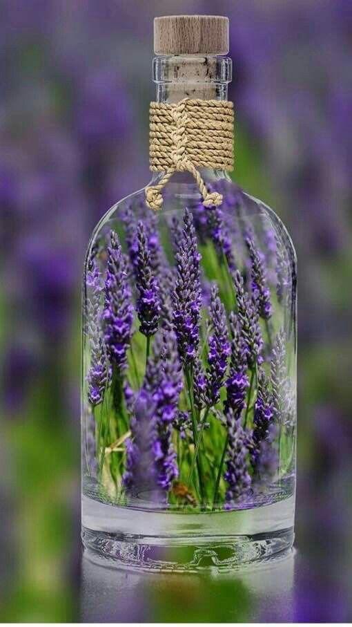 Tan esencial es tu aroma de lavandas en mi vida,que tengo un frasco de ti y te llevo conmigo a todas partes ♥♥♥