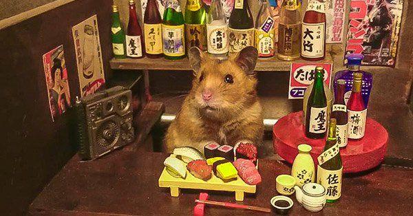 Conjunto de tiernas fotos de hámsteres en diferentes sets miniaturas. Desde cocinas , bares hasta librerías o haciendo sushi para sus clientes