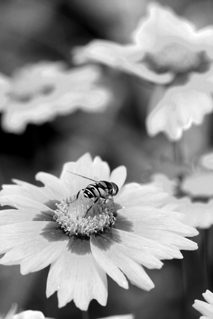 17 best images about black and white flowers on pinterest