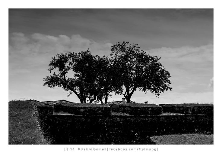 [2014 - Valença do Minho - Portugal] #fotografia #fotografias #photography #foto #fotos #photo #photos #local #locais #locals #cidade #cidades #ciudad #ciudades #city #cities #europa #europe #arvore #arbol #tree @Visit Portugal @ePortugal