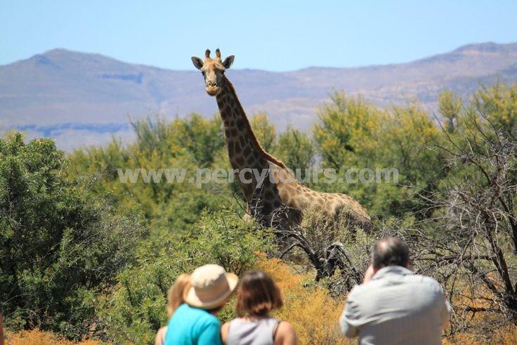 Safari park near Hermanus / Cape Town - http://www.percytours.com/safari-park-trips.html