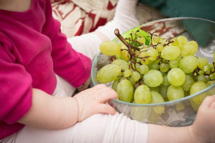 Grape harvest with #children