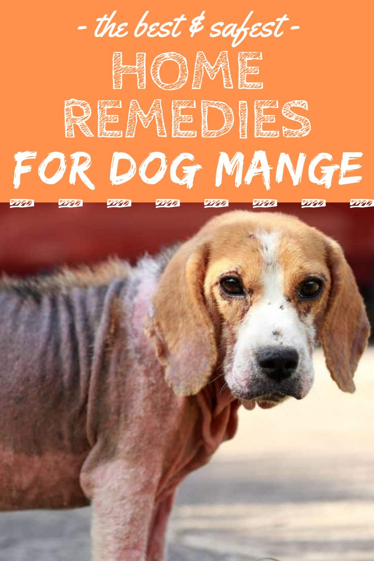 6 home remedies for dog mange other otc treatments