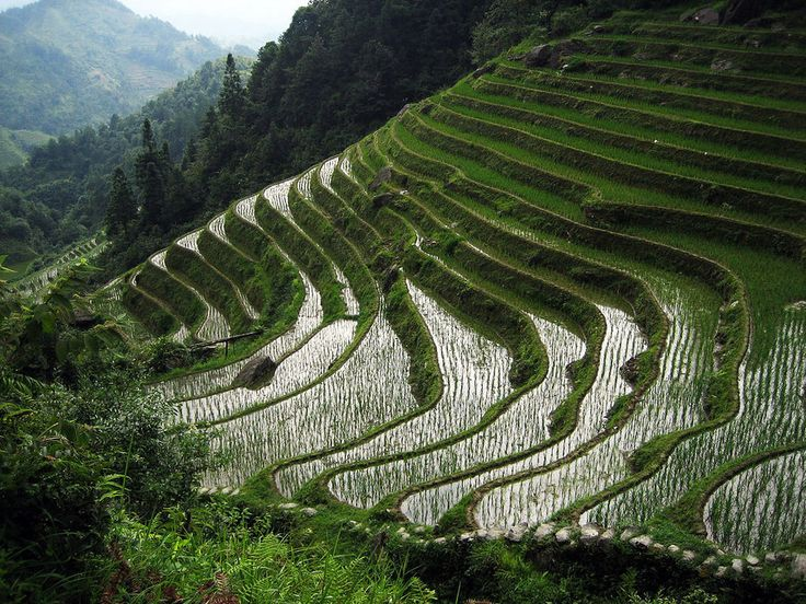 history of asian agriculture
