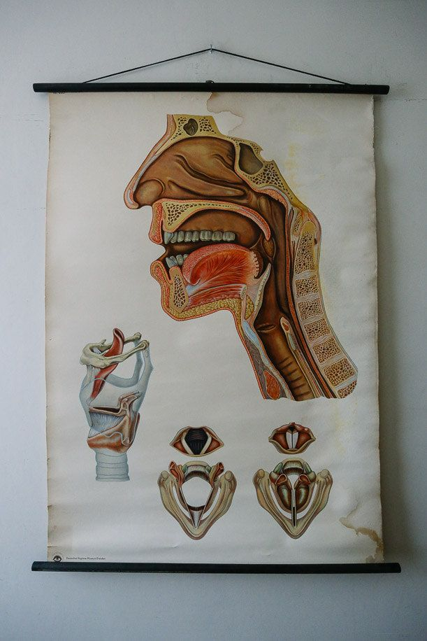 21 best Vintage Anatomical \ Medical Wall Charts images on - medical charts