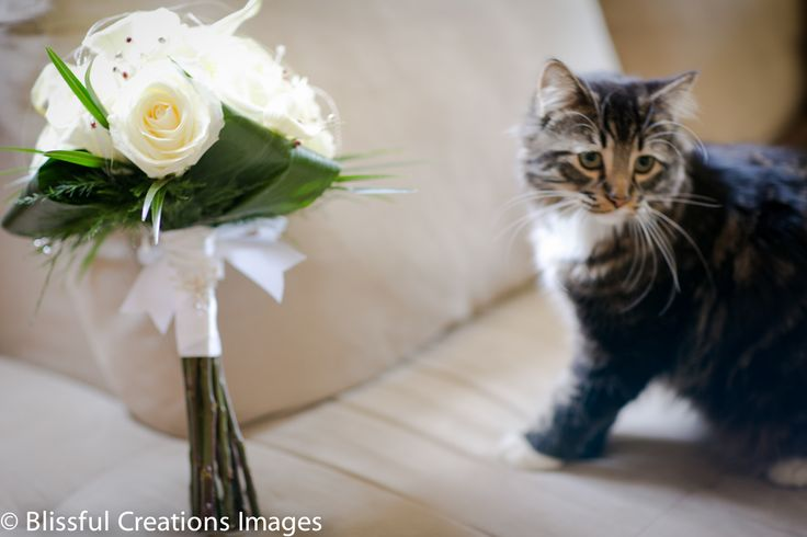 #cat playing with #bouquet