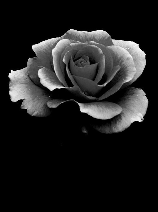 Black and white rose | Photography | Pinterest | White ...