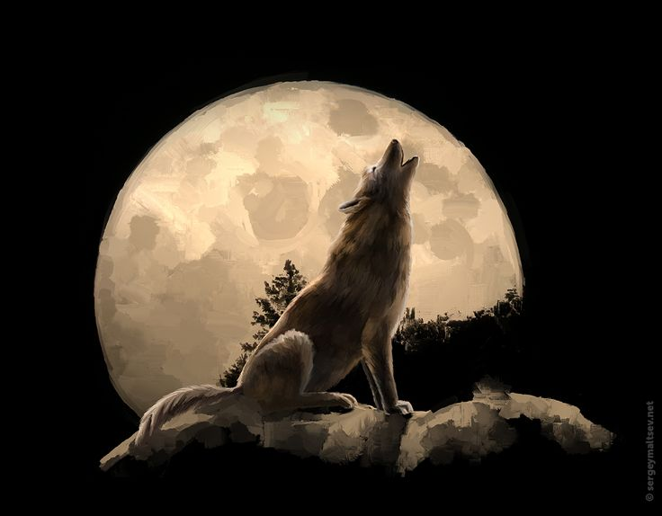 Wolf howling at the moon. Волк воет на луну.