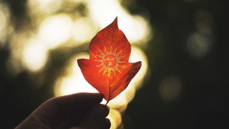 Papel De Parede Baseando Se Em Folhas De Outono