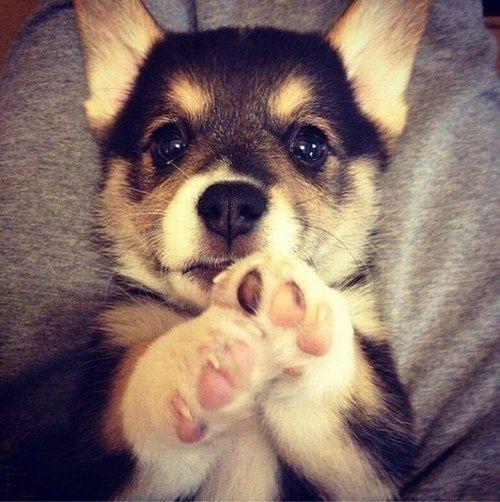 Just a puppy.