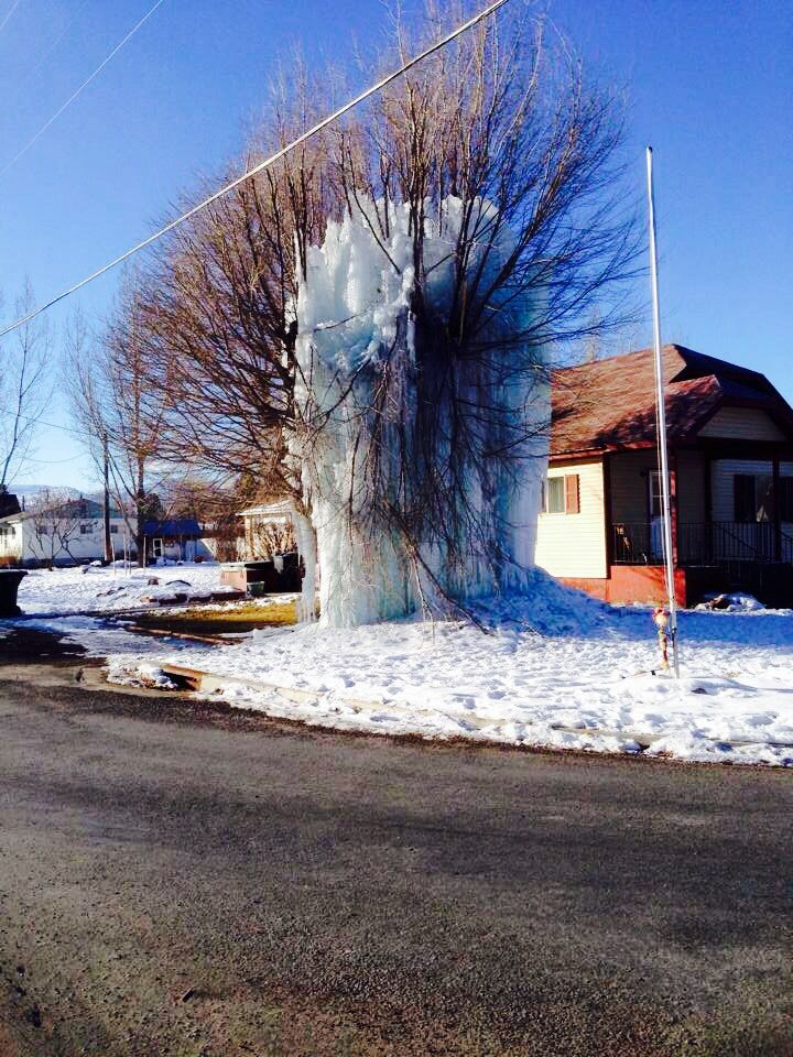 Frozen tree. Just awesome!