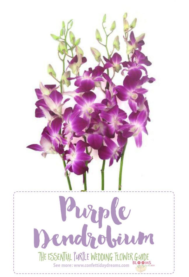Complete guide to purple wedding flowers purple flower names pics looking for purple wedding flower names with pics from dark purple flowers to light purple flowers for a wedding weve got you covered with season info mightylinksfo