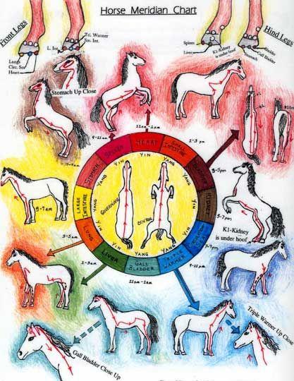 equine meridian chart | Meridian Maiden Chart