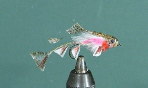 Minnow with fins fly pattern david martin fly fishing pdf