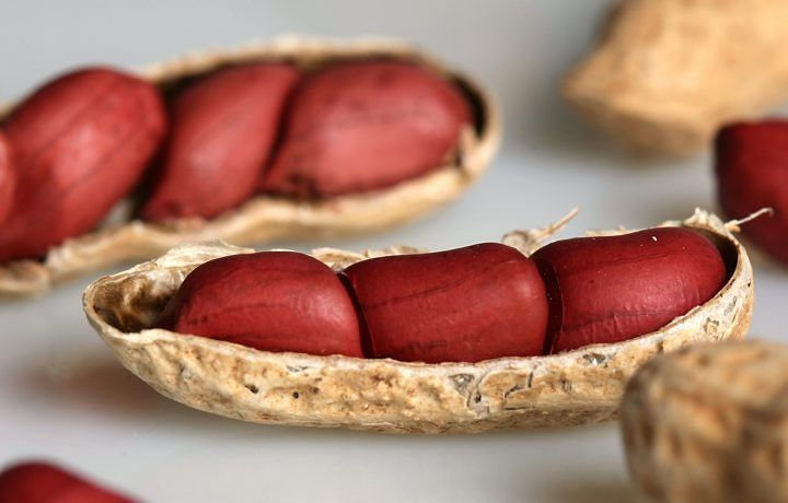 """Você sabia que: O amendoim (""""Arachis hypogaea"""") é uma planta da família Fabaceae, como o feijão e a ervilha. Suas vagens, no entanto, se desenvolvem dentro do solo. O pedúnculo floral, após a polinização, curva-se para baixo, continuando a crescer até enterrar o ovário da flor. No solo, as vagens se desenvolvem e amadurecem."""