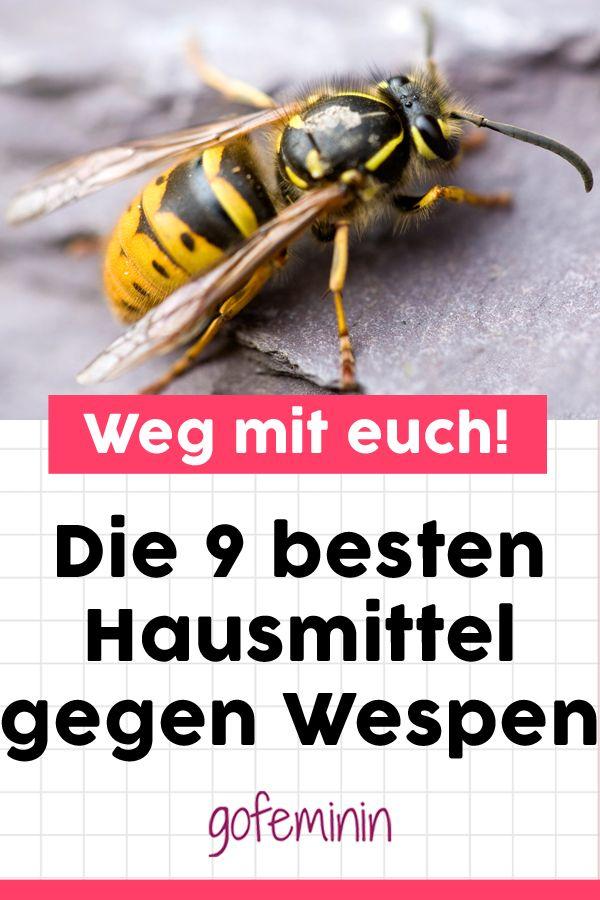 9 Geniale Hausmittel Gegen Wespen Damit Vertreibt Ihr Die Fiesen Viecher Garantiert Hausmittel Gegen Wespen Hausmittel Wespe