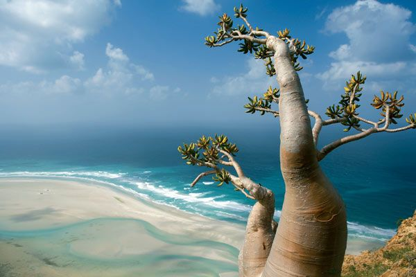 Socotra an island from the Dinosaur's time. Jurustic park movie should be done here ;)