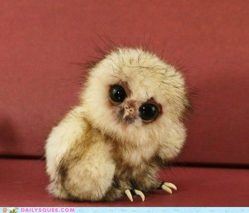 Baby Ball of Floof  All of us. even the prettiest of us, went through an awkward phase at one point. Don't get down on yourself widdle Owl, we all think you're squee!