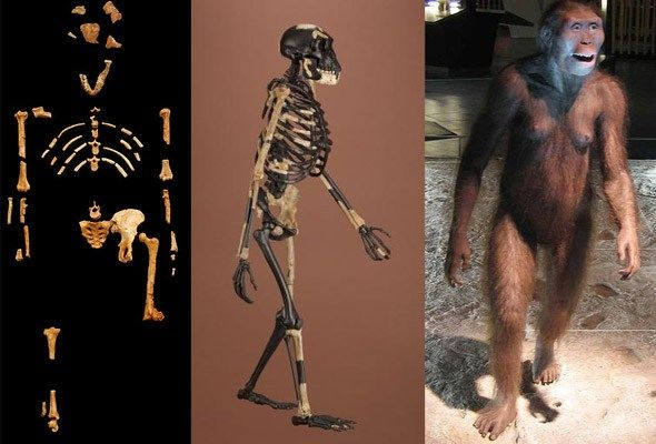 Lucy (Australopithecus afarensis). 1. What had been found of Lucy; 2. Lucy's gate; 3. a reconstruction.