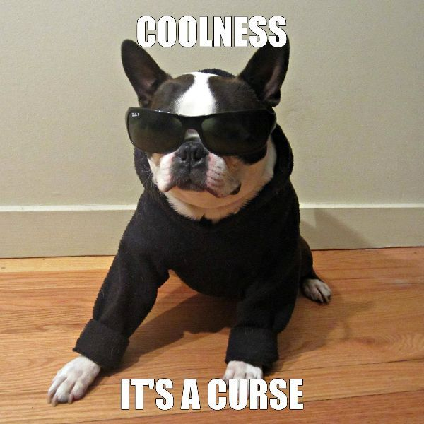 Coolness.. ❤❤❤ from: http://bostonterrierworld.com/coolness-2/