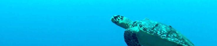 Acciones para cuidar a las tortugas marinas
