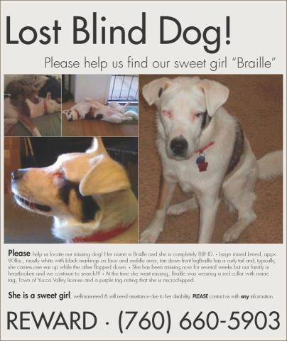 LOST BLIND DOG!!!!! Braille was lost in Yucca Valley - about 30 miles northeast of Palm Springs.....SHE IS MICRO-CHIPPED!!!! Missing since Sept 26th from her yard. Please help bring Braille home!!! My heart is breaking over this one. Please join her Facebook page (link below) to keep up with her story https://www.facebook.com/BringBrailleHome  I just spoke to the owner and she is still missing, please spread the word and get her home in time for Christmas (760) 660-5904   12.16.12