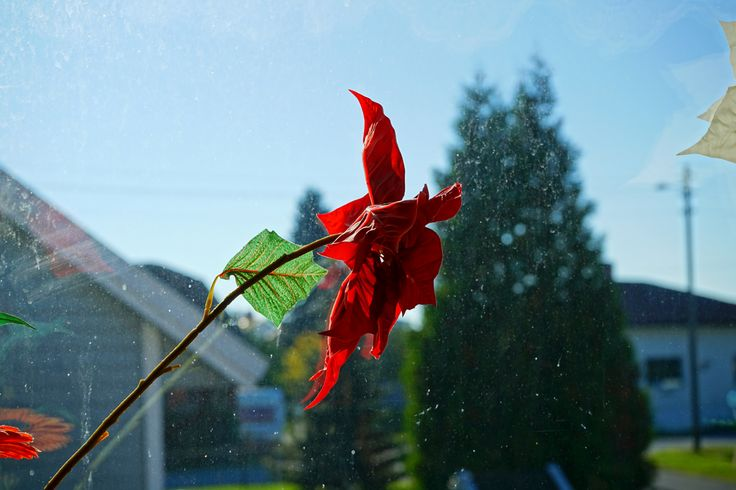 i used the red flower as my main subject when taking the picture. i did not expect the dirt on the window to compliment the picture.   This picture is unedited and directly from my camera