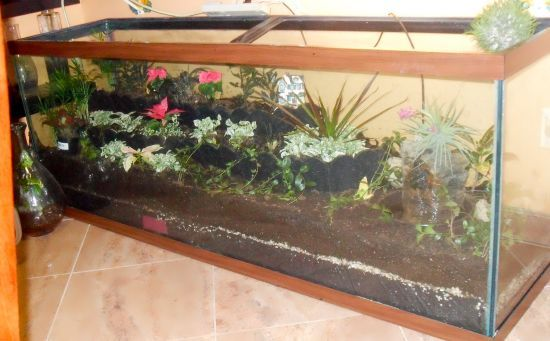 The Fish Tank Terrarium- A great idea for one of my fish tanks.