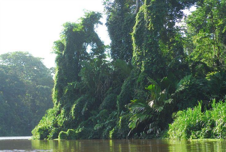 Nationalpark Tortuguero, Costa Rica
