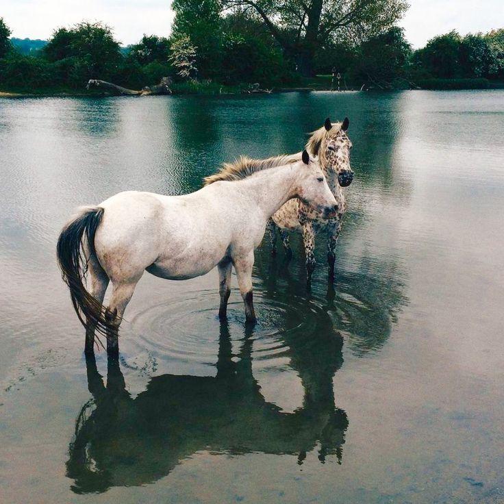 Pferde im Wasser hängen. – #Hängende #Pferde #Wasser