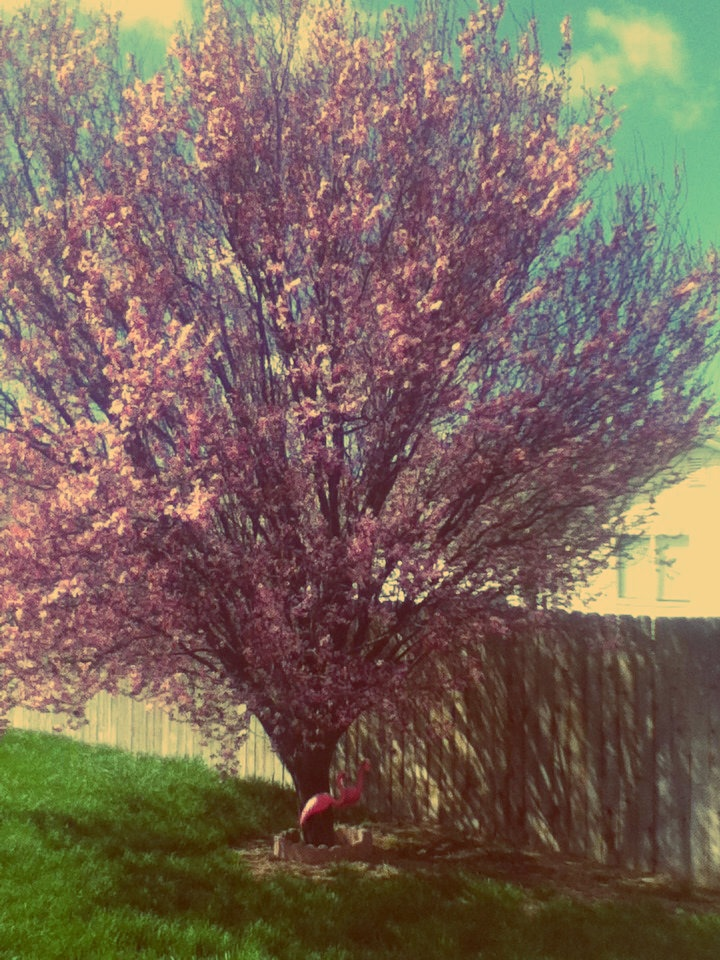 Spring is in my back yard!