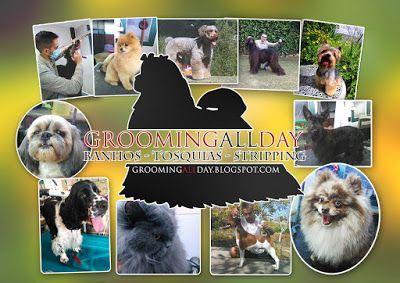 #GroomingAllDay: 3ª Edição da Feira Animal em Oeiras dia 7 de Maio ...