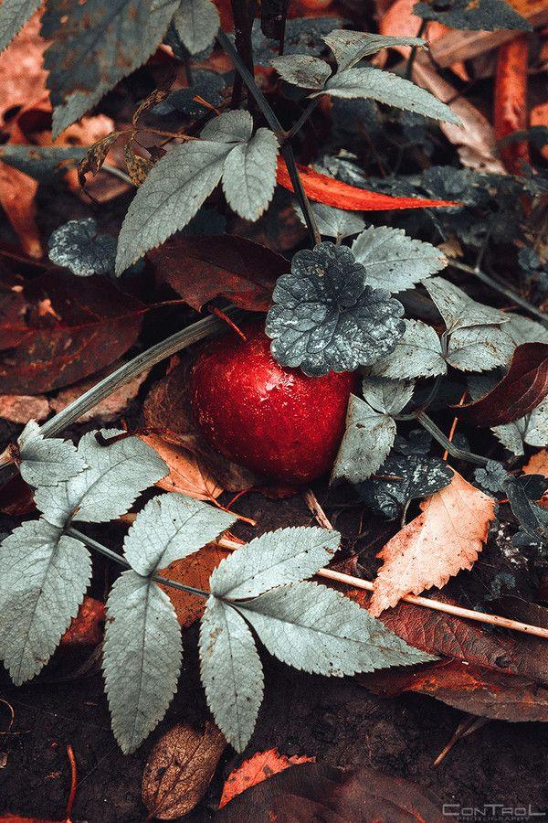 'Apple from a fairy tale' by Slava Samoilenko on 500px