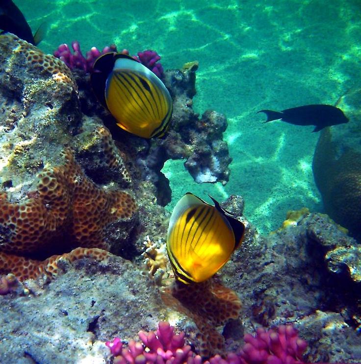 Egipt kusi amatorów nurkowania. Fot. radio RMF FM