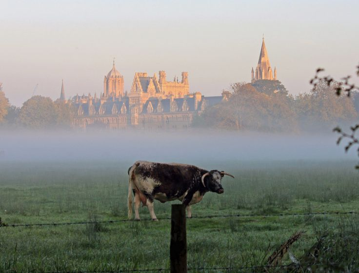 Because Christ Church Meadow has Longhorn cattle. | 43 Reasons Living In Oxford Ruins You For Life