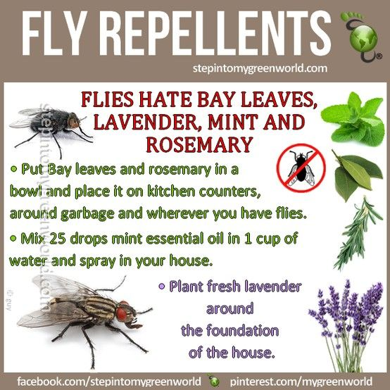 How to get rid of those pesky flies. I think we are going to do some planting this weekend!!!