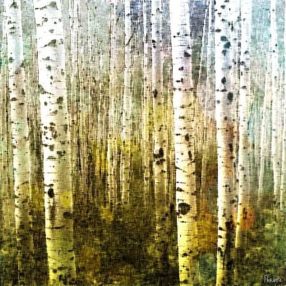 13 best Aspen paintings images on Pinterest | Birch, Abstract art ...