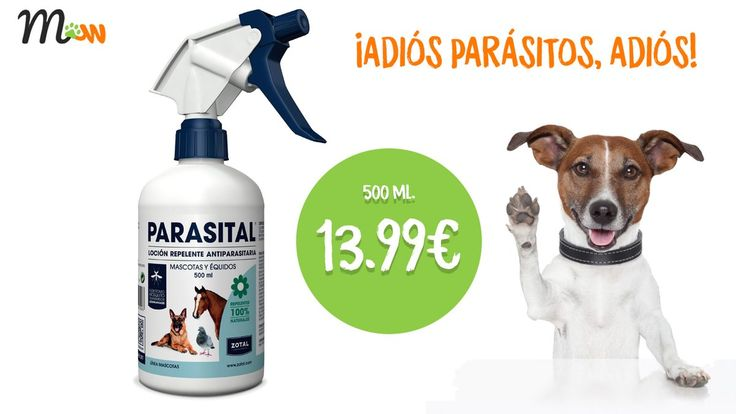 Di adiós a los #parásitos con la #loción #repelente de Zotal Laboratorios #Parasital para #perros #caballos y #aves   https://goo.gl/ABWkpq   #spray #antiparasitario #zotal #parasital #mascotas #repelente #tiendademascotas #mascoweb