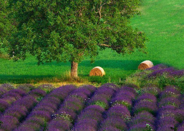 myinnerlandscape:  Provence by Ana Tramont