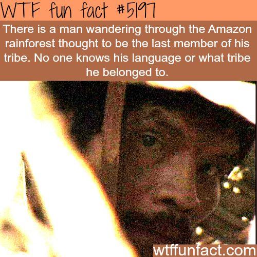 Best Amazon Rainforest Facts Ideas On Pinterest Amazon - 8 cool facts about madagascar
