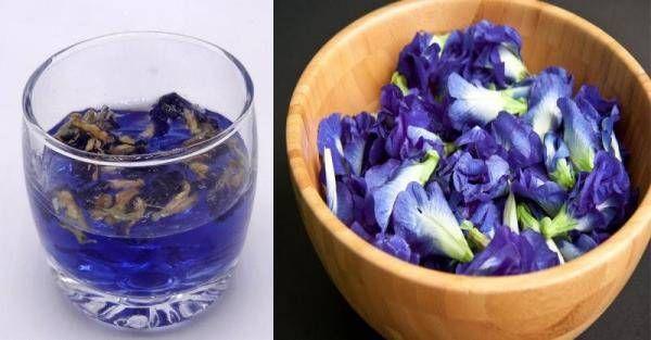 蝶豆花在台灣不足為奇,因為它掀起一股飲料風潮,深受台灣人的喜歡,尤其是喝一杯蝶豆花茶,看到那美麗的顏色,深受很多女人的喜歡,它還是花青素的10倍,功效強大,減肥、抗衰老抗氧化等,但是唯獨有這四種人不能碰,下面我們來看看!蝶豆花是一種原產於拉丁美洲的熱帶藤蔓植物,花色為藍紫色,外觀酷似蝴蝶。根據國外網...