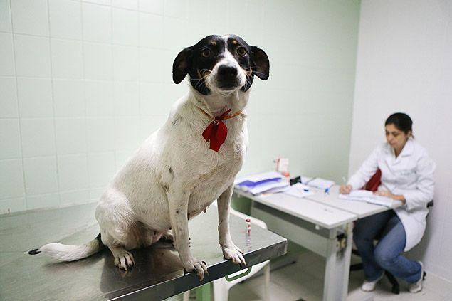 Acampanha de vacinação contra raiva em cães e gatos foi prorrogada em São…