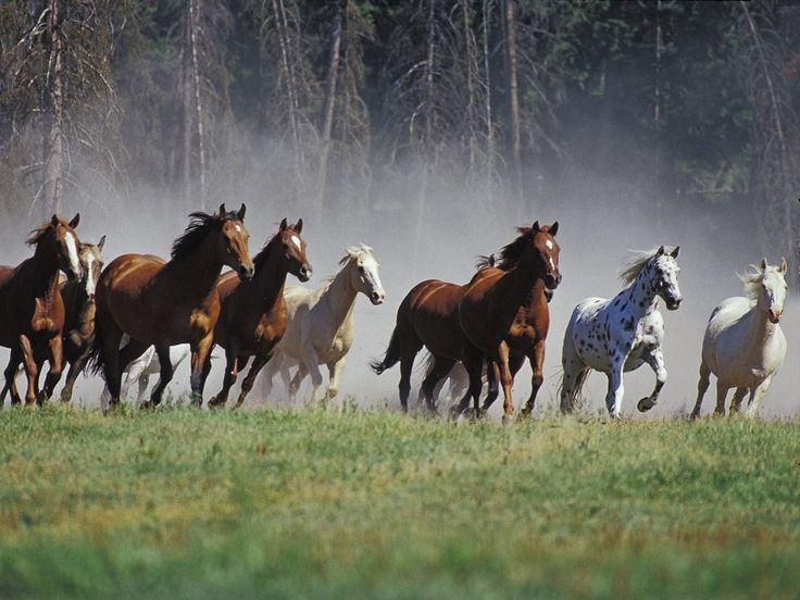 Quiero un mundo en el que vuelvan a existir las manadas de caballos salvajes