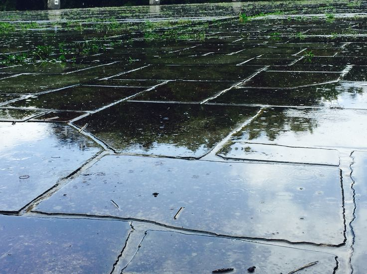[p]学校にいる際、ゲリラ豪雨終わりたてにとりました。青空と木々が反射していて綺麗。