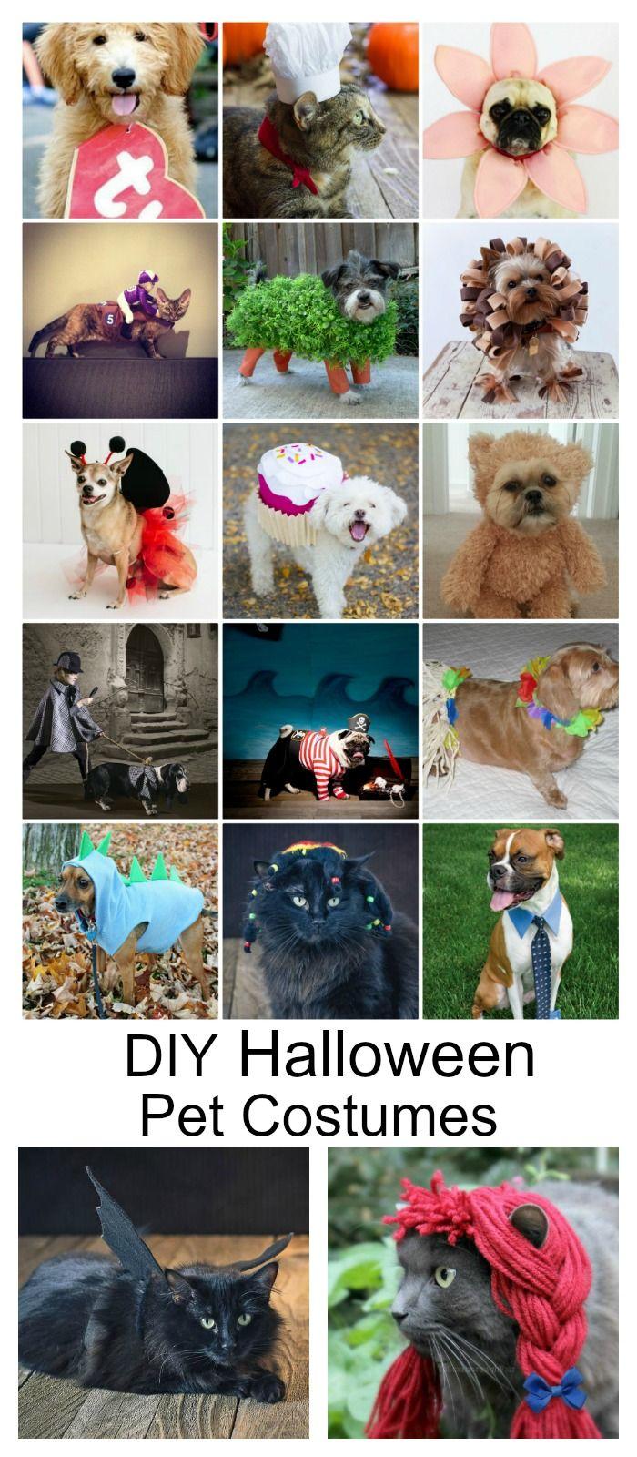 diy dog halloween costumes pinterest
