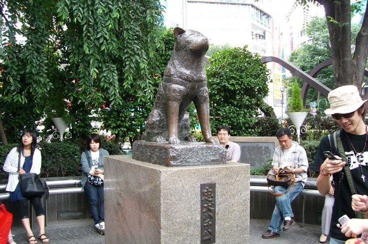 #Japan #Shibuya #Hachiko Statue/  #ShibuyaStation http://traveldreamscapes.wordpress.com/2014/09/30/japan-shibuya-hachiko-statue-shibuya-station/